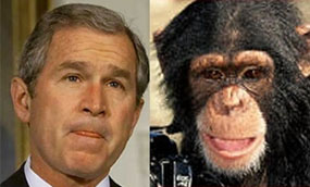 bush_or_chimp.jpg